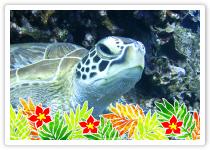 ボートダイビング ケラマ諸島