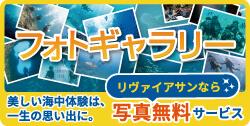 沖縄ダイビングギャラリー